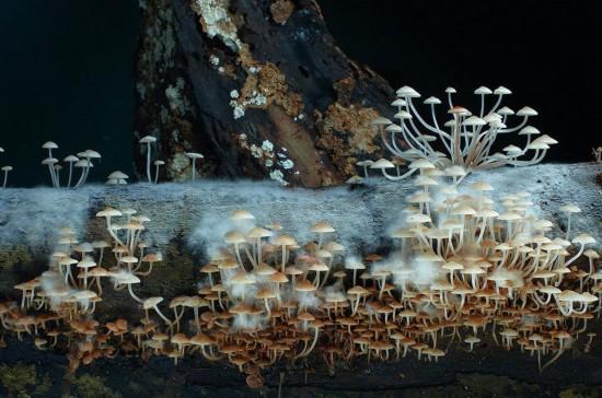 自然界中的菌类(2)