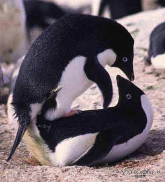 为了繁衍后代 动物世界千奇百怪的交配过程(22)