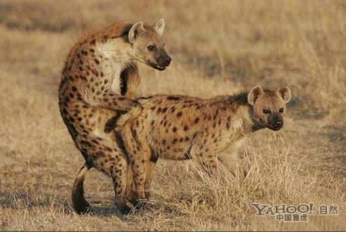 为了繁衍后代 动物世界千奇百怪的交配过程(24)