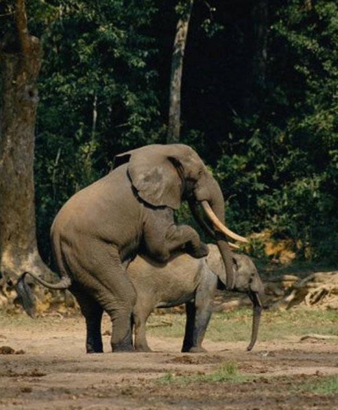 为了繁衍后代 动物世界千奇百怪的交配过程(25)