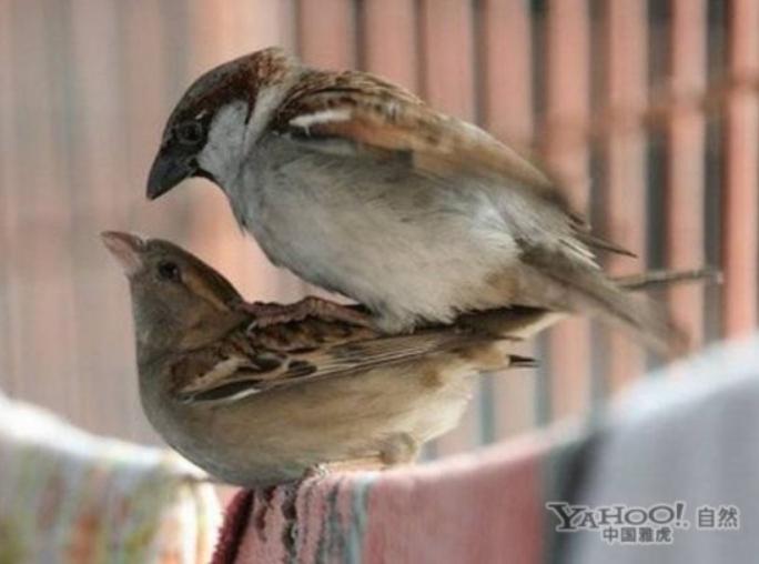 为了繁衍后代 动物世界千奇百怪的交配过程(28)