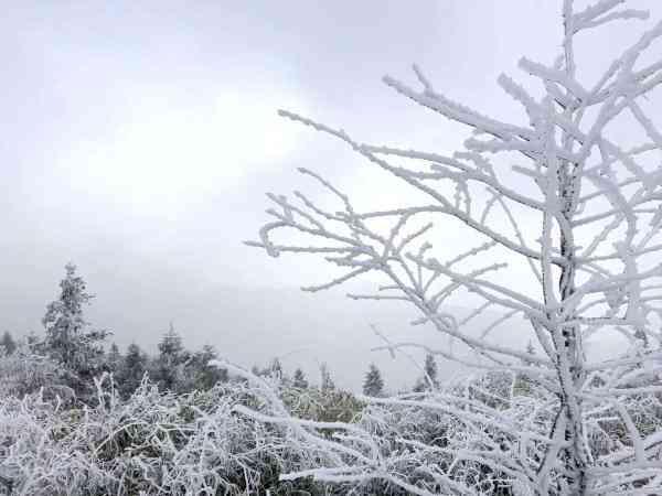 杭州也有雾凇奇观 游客:假装去了雪乡