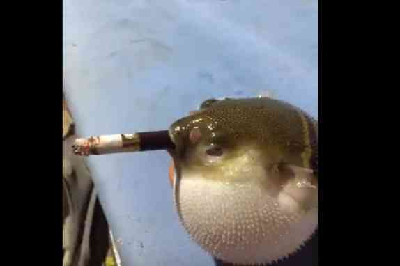 男子给奇葩怪鱼抽中华,结果怪鱼的表现亮了
